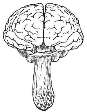 brainfood mushrooms logo